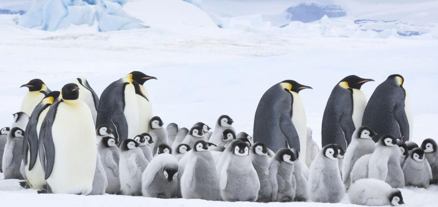 Coming Soon: March of the Penguins 2: The Call